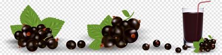 Set of various stylized ripe fresh black currants. Vector illustration, eps 10