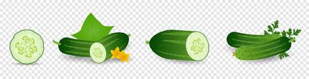 Gurkenpflanze. Set aus Gurkensamen, Sprösslingen, Blumen, Blättern, Gemüse. Pflanzenwachstum. Vektorelemente auf transparentem Hintergrund isoliert