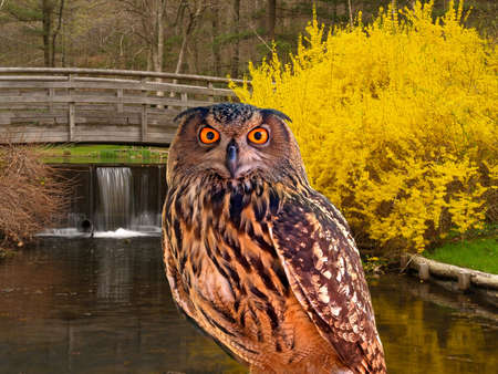 an young owl at a state park photo