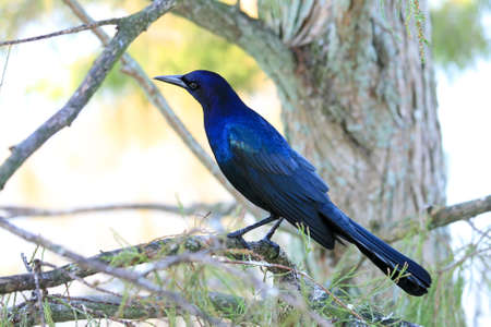 beck: tropical bird in a park in Florida