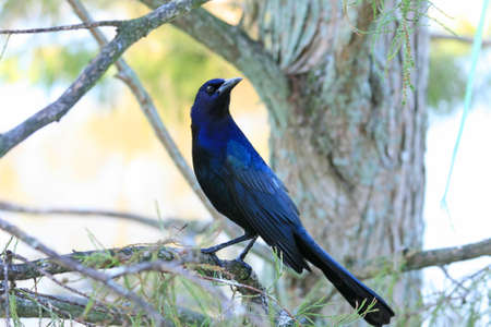 tropical bird in a park in Florida