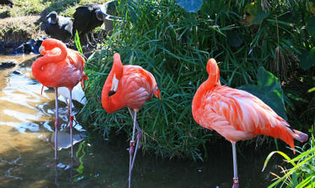 red flamingo in a park in Florida photo