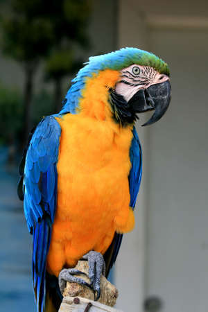 speaking parrot in a park in Florida