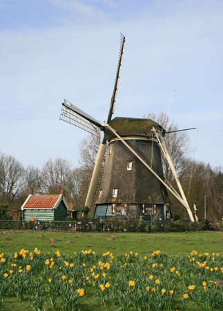 dutch: The historical windmill in the Dutch countryside