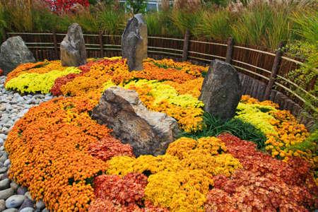 flower show: Uno spettacolo giapponese Kiku fiore in un giardino botanico.