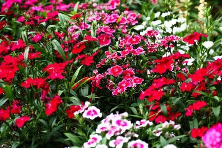 botanic: Flowers at a botanic garden in Florida