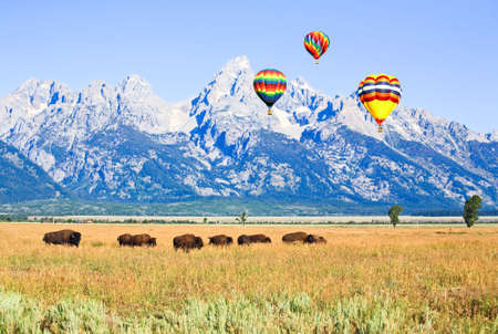 Bisons at Antelope Flats at Grand Teton National Park in the morning photo