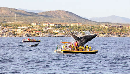 lucas: mama and baby whales in Pacific Ocean near Cabo San Lucas