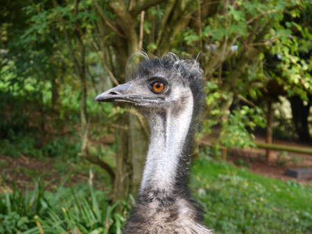 emu: Emu Side Portrait