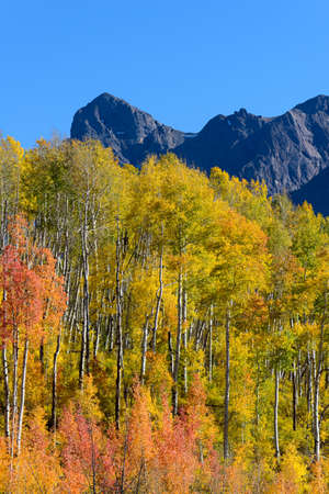 Colorado Autumn Scenic Beauty - Aspen Trees in the San Juan Mountains. Zdjęcie Seryjne