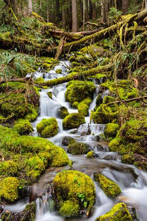 Mt. Rainier, Washington is a scenic wonder. Zdjęcie Seryjne
