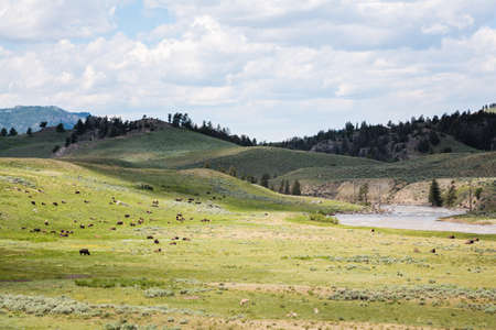 Dramatic Yellowstone Landscape With Bison and Other Wildlife Foto de archivo