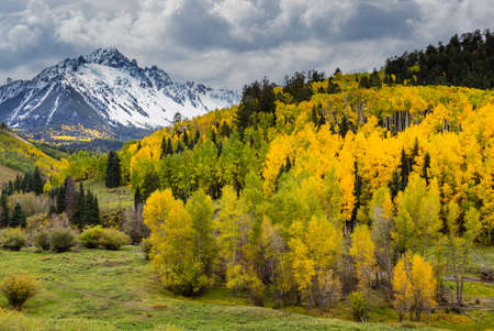 Golden Leaves of Aspen Trees in the Beautiful Rocky Mountains of Colorado. Autumn Color and Dramatic Clouds on the Dallas Divide Near Ridgway, Colorado