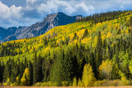 The Dallas Divide. Golden Leaves of Aspen Trees in the Beautiful Rocky Mountains of Colorado. The Dallas Divide.