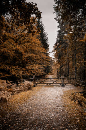 A country tack or path in autumn with a wooden gate and turnstile