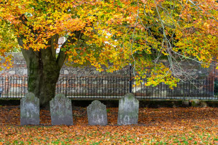 Four old headstones under an old oak tree in autumn or fall surrounded by brown leaves