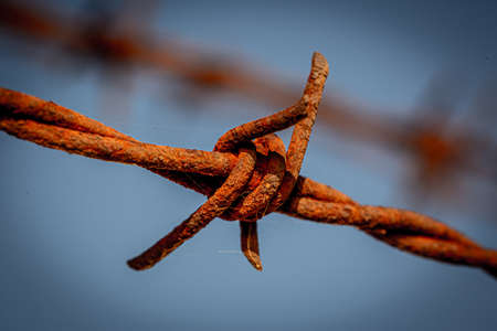 A close up a rusty barb of barbed wire