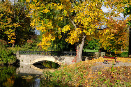 maple and arched bridge. autumn in the park. photo