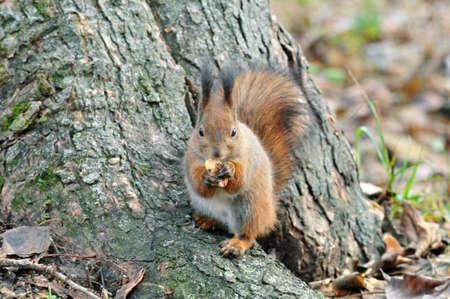 squirrel: Squirrel. Autumn, November.