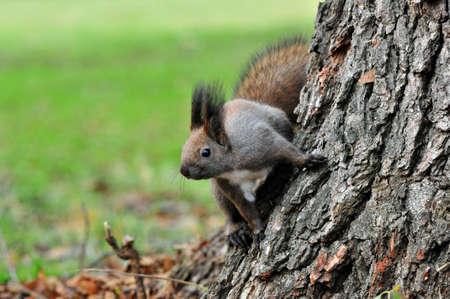 november: Squirrel. Autumn, November.