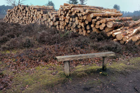 felled: Pile of cut logs on heathland with bench in foreground