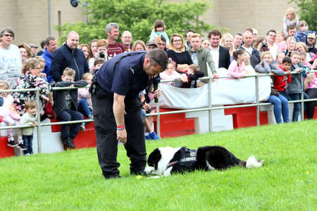 addressing: Beaulieu, Hampshire, UK - May 29 2017: Fire Dog handler of the Hampshire Arson Task Force working with his animal during the 2017 999 Show Editorial