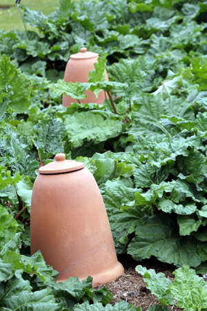 Large ceramic earthenware pots in a vegetable garden