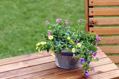 Pretty trailing petunias in a galvanised bucket on a wooden table Stock Photo
