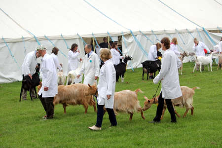Guildford, England - May 28 2018: Competitiors at the Surrey County Show presenting their dairy goats to the judges during the farm livestock competition