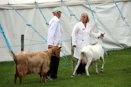 Guildford, England - May 28 2018: Competitiors at the Surrey County Show discussing their dairy goats during the farm livestock competition