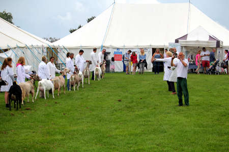 Guildford, England - May 28 2018: Judges at the Surrey County Show awarding prizes to competitors and their dairy goats during a livestock competition Editoriali
