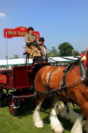 Guildford, England - May 28 2018: Dray or open wooden wagon belonging to Hook Norton Brewery, being pulled by two bay Shire horses in traditional leather tack