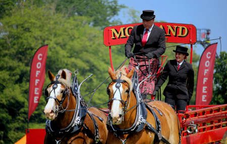 Guildford, England - May 28 2018: Dray or open wooden wagon belonging to Morland Brewery, being pulled by two bay Shire horses in traditional leather tack