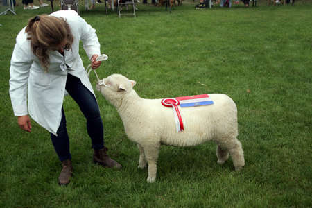 Guildford, England - May 28 2018: Woman breeder and her prize winning Southdown Sheep