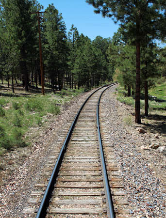 Train Tracks Through Pine Forest Stock Photo