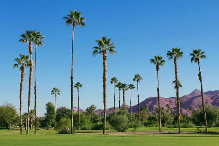 golf of california: Tropical Landscape