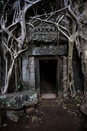 wat: Ancient tree at Ta Prohm temple in Angkor Wat, Cambodia