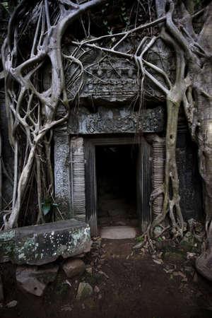 angkor: Ancient tree at Ta Prohm temple in Angkor Wat, Cambodia