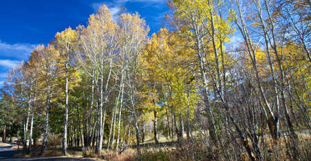 Rocky Mountain National Park in the Fall  Colorado photo