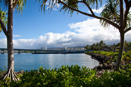 A submarine as seen through the palm trees in Pearl Harbor photo