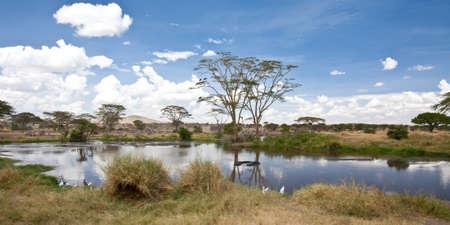 Eine Reihe von Hippos einweichen sich im Wasser. Serengeti National Park, Tanzania.