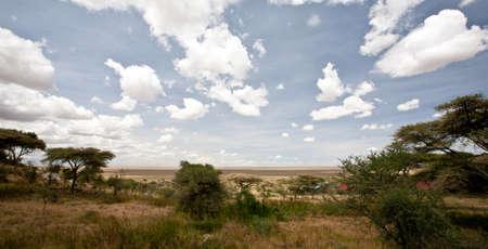 Acacia trees on the African Savanna. Serengeti national park, Tanzania Stock Photo
