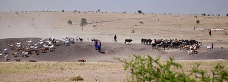 Masai boys herd the Goats and cattle across the dusty plain leading them to water  Serengeti National Park, Tanzania
