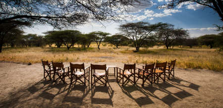 acacia tree: A number of chairs set up to view the sunset over the savanna. Manyara Ranch Concervancy. Tanzania