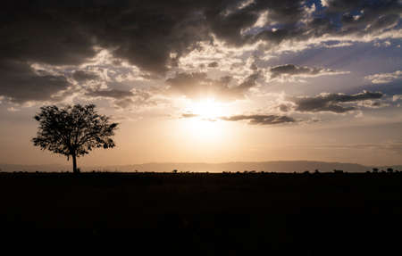 The sunsets on the savanna silhouetting an acacia tree. Serengeti National Park, Tanzania