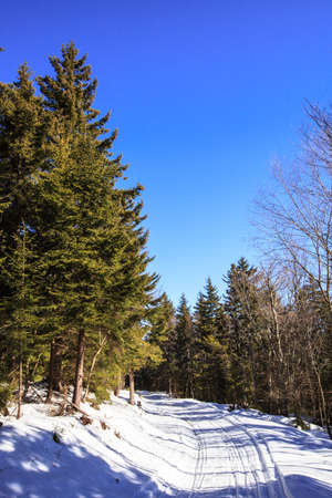 west virginia trees: A road through the forest in the spring snow  Snowshoe, West Virginia