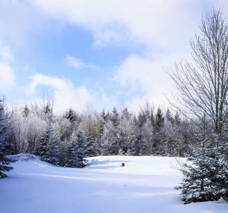 west virginia trees: The morning after a fresh snow on a ride through the forest. Snowshoe, WV
