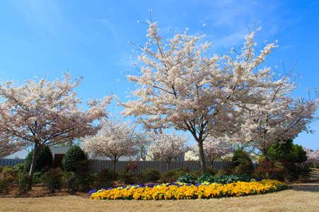 suburban: Landscaping in the spring of a typical American Suburban neiborhood. Matthews, NC Stock Photo