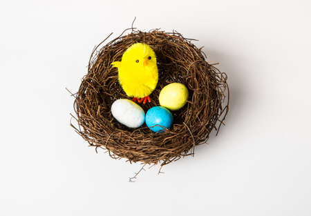 Easter Chick with a number of chocolate candy eggs in a birds nest. Isolated on a white background. photo