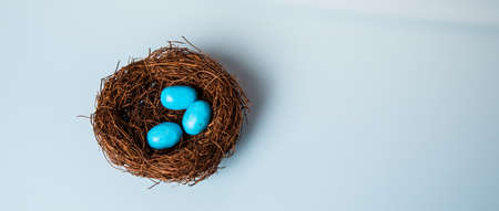 Spring nest full of blue Robins Eggs. Studio isolated on Blue. photo